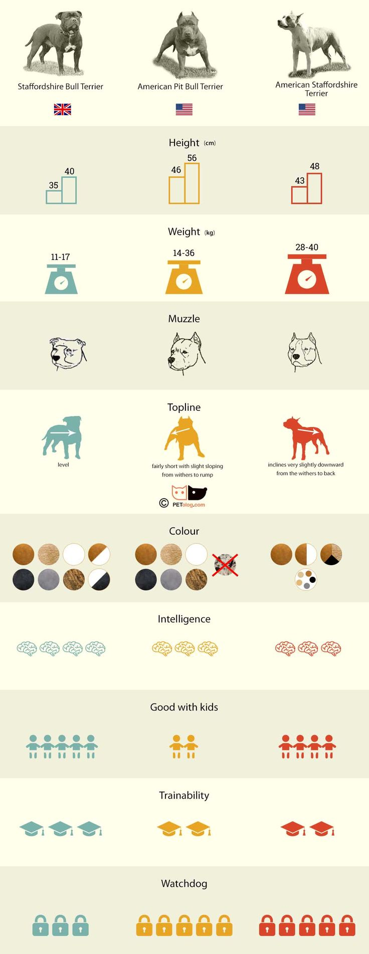 Free Infographic Submission Site: http://infographicplace.com/ Infographic: Staff or Pitbull - infographic. What's the difference between: Staffordshire Bull Terrier, American Staffordshire Terrier, American Pitbull Terrier in infographic
