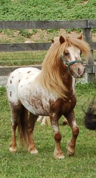 That horse kind of looks like my Buttercup except a TON smaller!