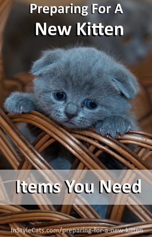 Tips To Prepare For A New Kitten - Supply List. This is a comprehensive kitten checklist for supplies you need to care for kittens.