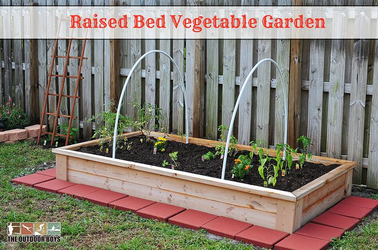 Are You Looking To Start Your Own Backyard Vegetable Garden Need To Build A Raised Bed From