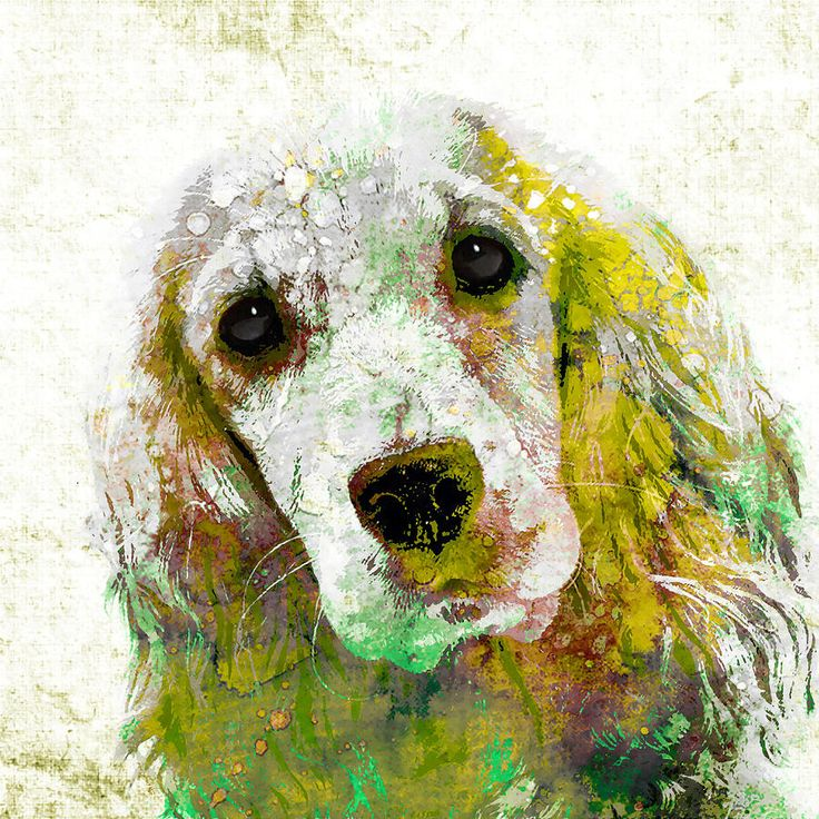 Cocker Spaniel  Copyright © 2015 Stacey Chiew. All rights reserved.