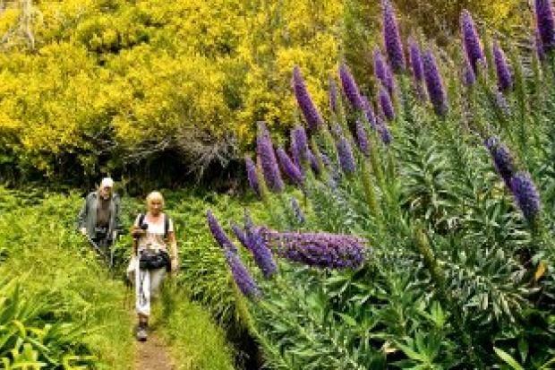 Wandern in wilder Natur entlang der Levadas, die Madeira wie steinerne Adern mit lebenswichtigem Wasser versorgen. So entdeckt man das sehenswerte Herz der Insel.