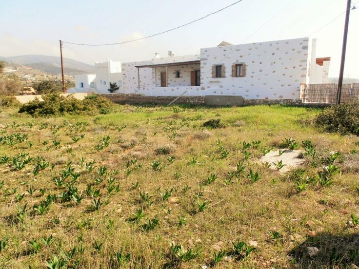 D107  SCOPAS PAROS REAL ESTATE IMMOBILIERE MAISON CASE