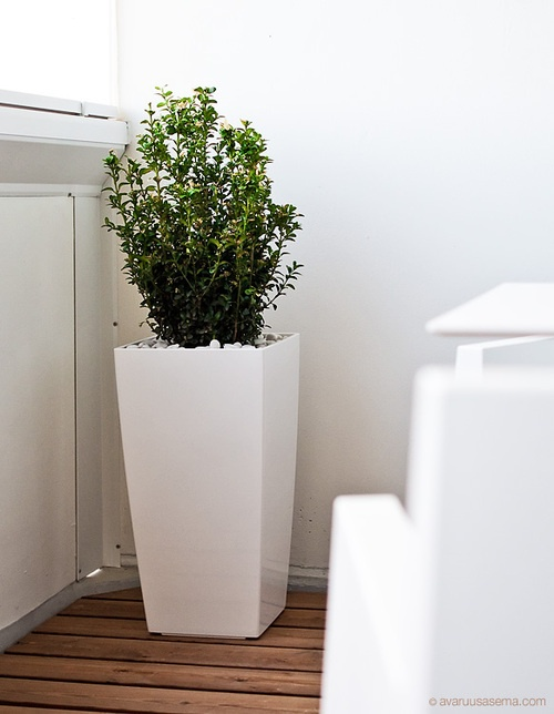 Very striking, beautiful white high gloss square lechuza cubico resin planter! From only £19.95