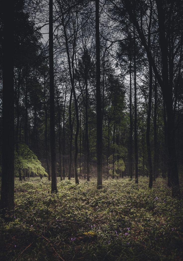 http://blog.freddieardley.com/post/103392316752/woodlands-of-the-united-kingdom-by-freddie-ardley