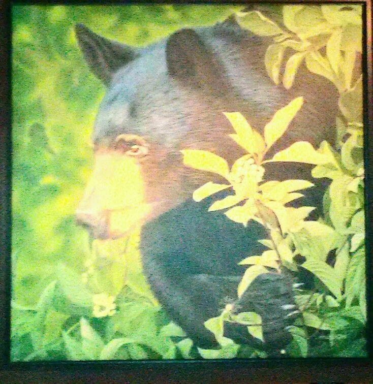Black Bear Eating Dogwood Nuts by Lynn Pocklington hung at Wood Restaurant across from Pemberton Gateway Village Suites Hotel