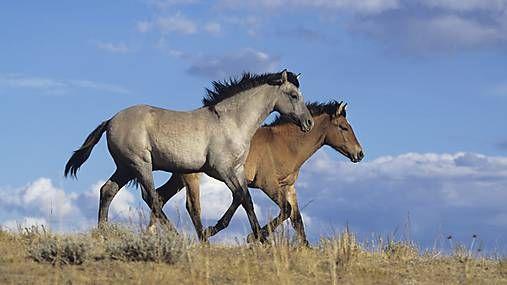 GaleryPhoto / Beh koní