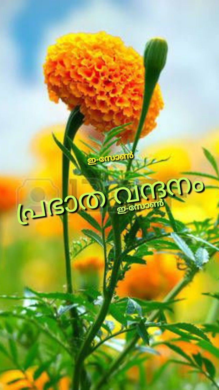 Pin By Eron On Good Morning Malayalam Beautiful Flowers Wallpapers Amazing Flowers Flowers Photography