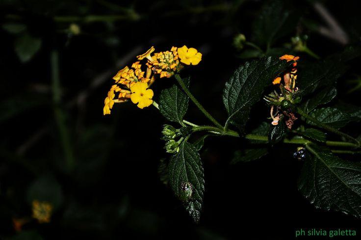 natura verde | Flickr - Photo Sharing!