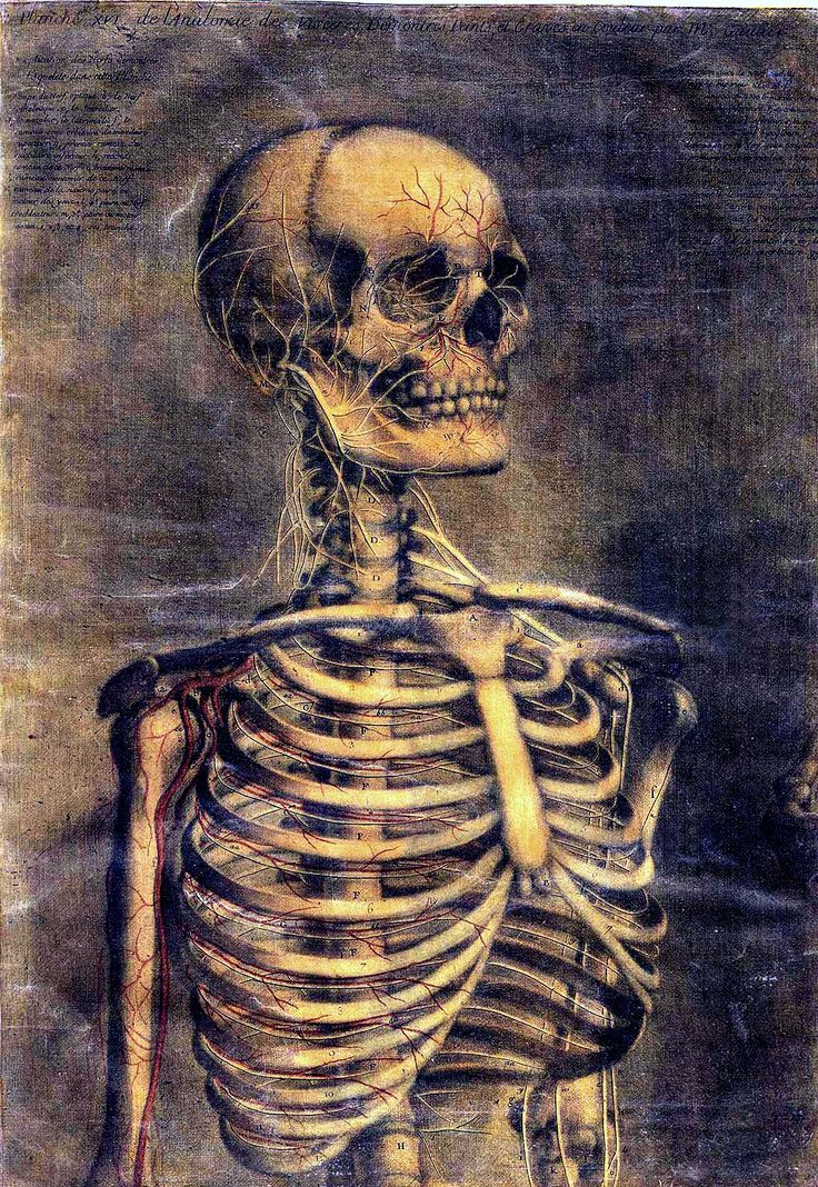 """scientificillustration: """" Jacques Fabian Gautier d'Agoty: Anatomie generale des viscères en situation, de grandeur et couleur naturelle, avec l'angeologie, et la nevrologie de chaque partie du corps..."""