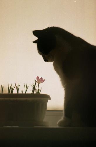 お花、好き