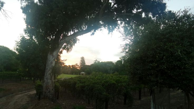 Great year 12 formal held at the National Wine Centre Of Australia in Adelaide, SA. Evening fall's over the vines.