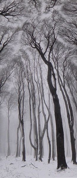 Jiří PLATENKA :: Winter Forest, 1970's