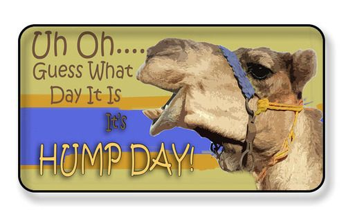 Uh Oh Guess What Day It Is? It's Hump Day Magnet - PACKAGE OF 4