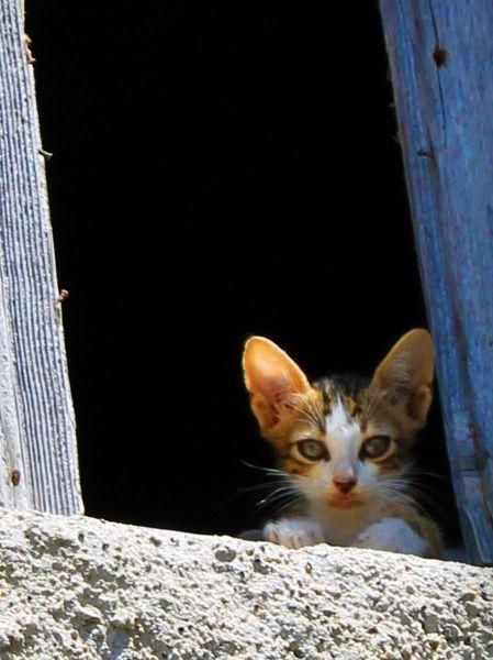 Looking out the window - Cat in Greece www.robertozedda.it