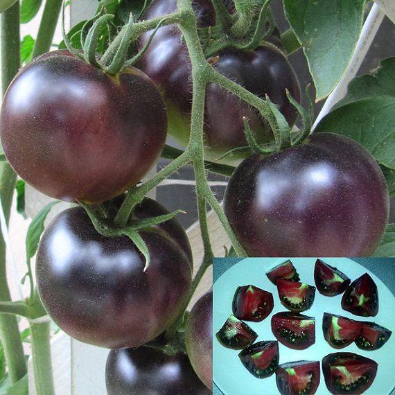 20 black cherry tomato seeds russian black krim by oneflowershop plants garden pinterest. Black Bedroom Furniture Sets. Home Design Ideas