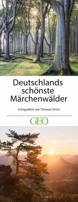 Leserfotograf des Monats: Deutschlands schönste Märchenwälder – Andrea Dreker