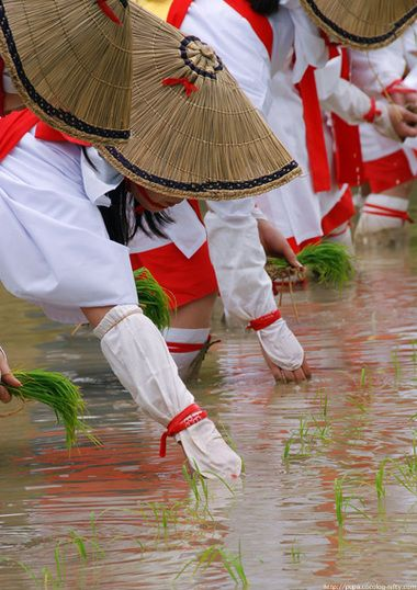 Onda-sai Festival (rice planting), Kyoto, Japan. This would be a pretty cool festival to go to, or at least interesting!