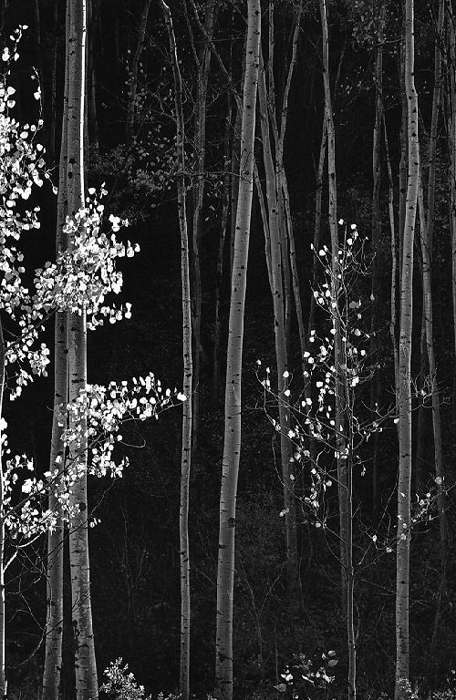 Detail from a photograph by Ansel Adams