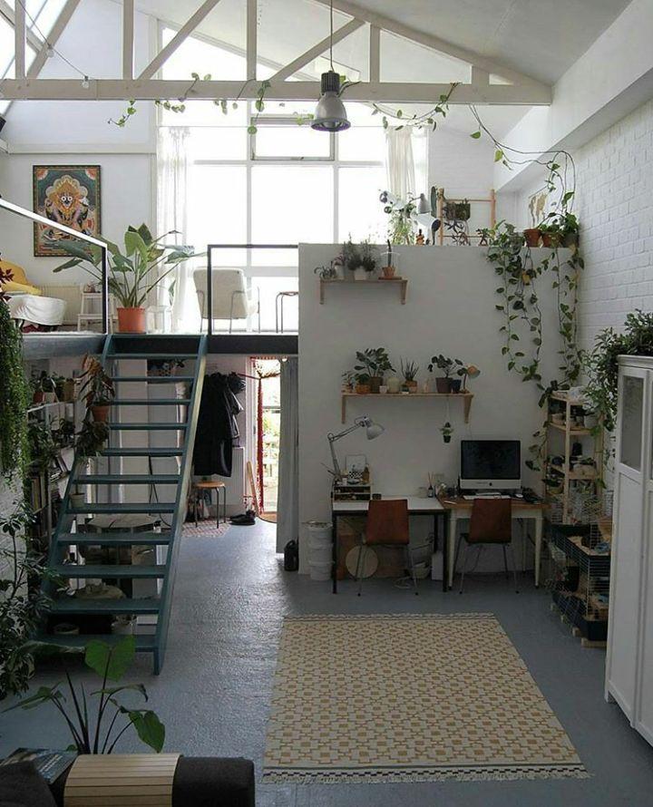 zagospodarowanie wnętrza z antresolą to wspaniałe miejse na pnące i wiszące rośliny - jasne i przestrzenne ailurophile