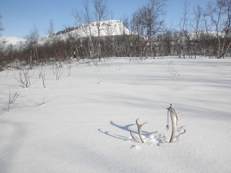 Saanatunturi, arctic hill in Finnish Lapland