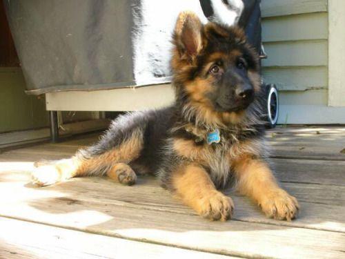 Love that cute dog!!