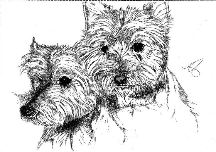 Twin terriers - completed to a tight deadline!