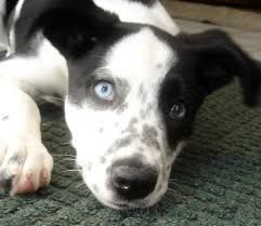 17 Best images about DALMATIAN MIXED on Pinterest ...