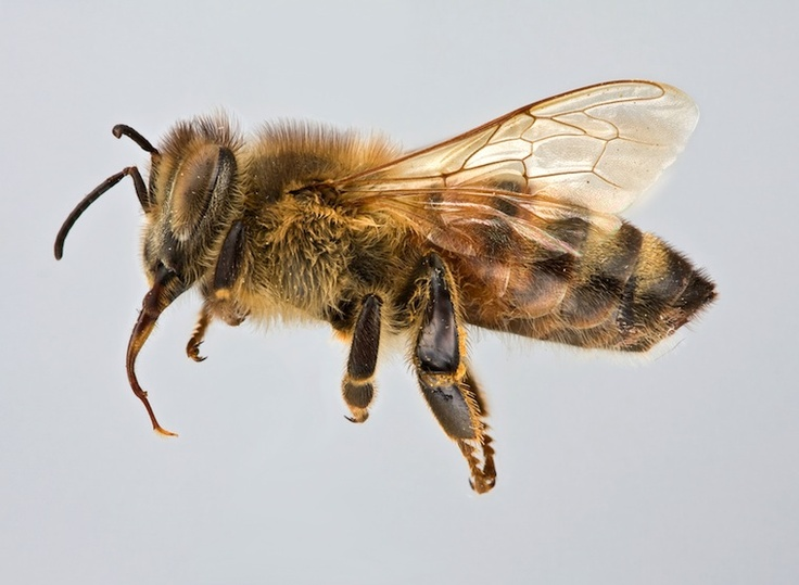 Honey bees are worth living