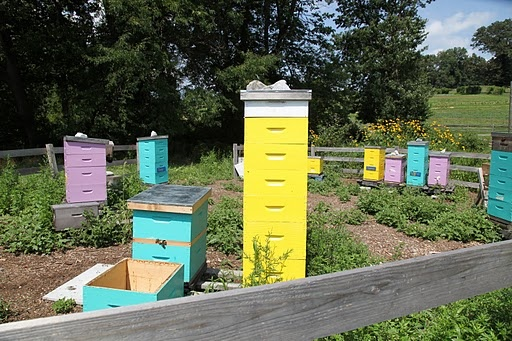 got to have honey bees on a farm---and they might as well look awesomePainting Bright, Reduce Solar, Solar Gain, Ultraviolet Spectrum, Hives Coolers, Stones Barns, Bold Colors, Honey Bees, Bright Colors