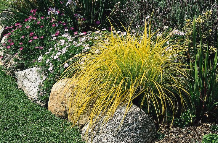 137 best garden images on pinterest garden plants patio for Ornamental grasses that grow in shade