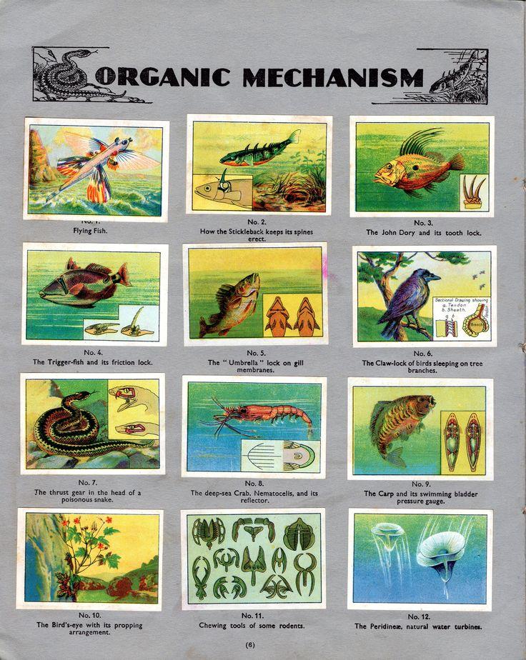 NESTLE': Wonders of the World (1932 - Organic Mechanism)