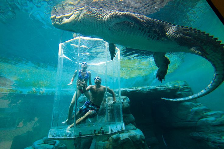 Swim with crocodiles in Crocosaurus Coves' Cage of Death in Darwin, Australia. #travel #bucketlist