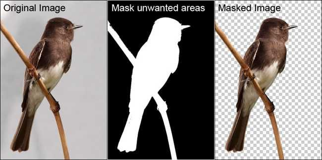 How To Use Layer Masks and Vector Masks to Remove Complex Backgrounds in Photoshop - How-To Geek