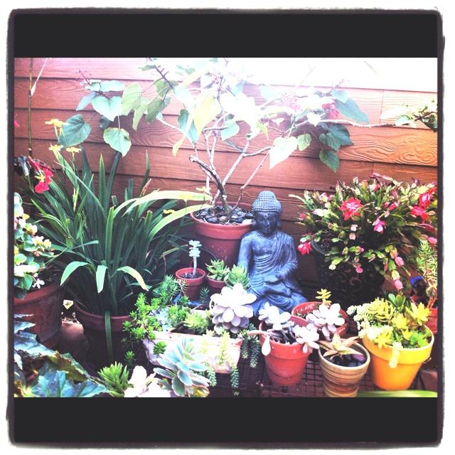 52 best Backyard images on Pinterest   Gardening ...