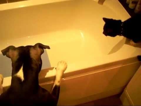 Best 25+ Dog bath tub ideas on Pinterest | Dog tub, Dog ...
