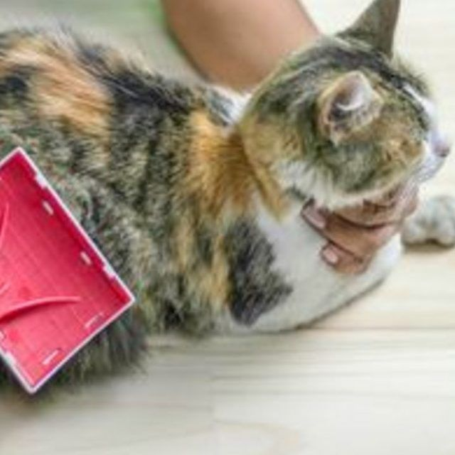 how to get rid of fleas outside house