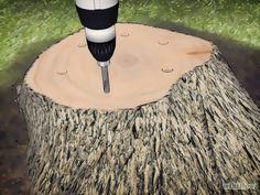 Image intitulée Kill a Tree Stump Step 6