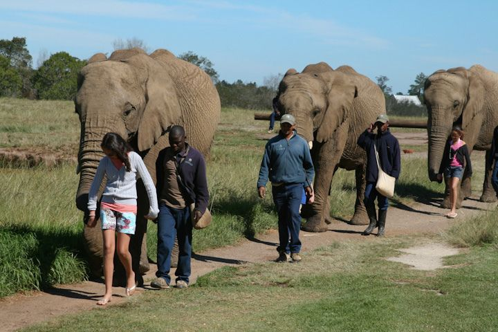 Plettenburg Bay, South Africa- Elephant Sanctuary...Yes, you get to walk the elephants, feed them and learn about them...a day I will never forget!