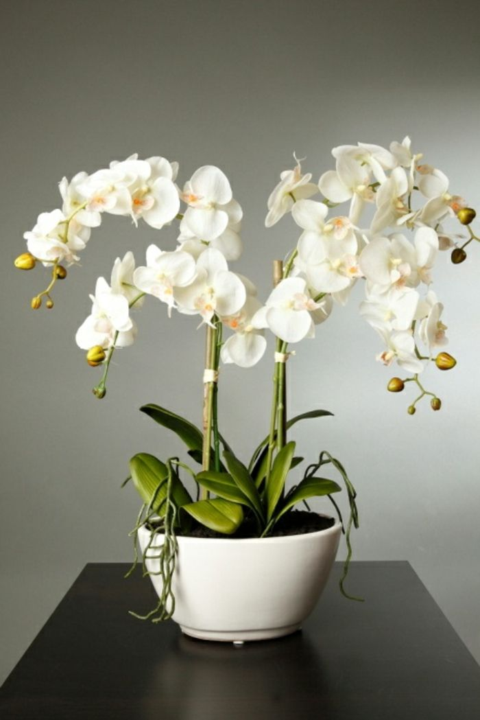 Très Les 25 meilleures idées de la catégorie Orchidée blanche sur  CB75