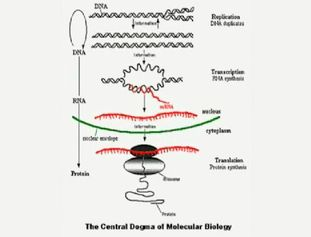 From Mendel to DNA:                                Nobel Prize winner, Sir Paul Nurse, explains three key understandings of genetics developed during the 20th century.