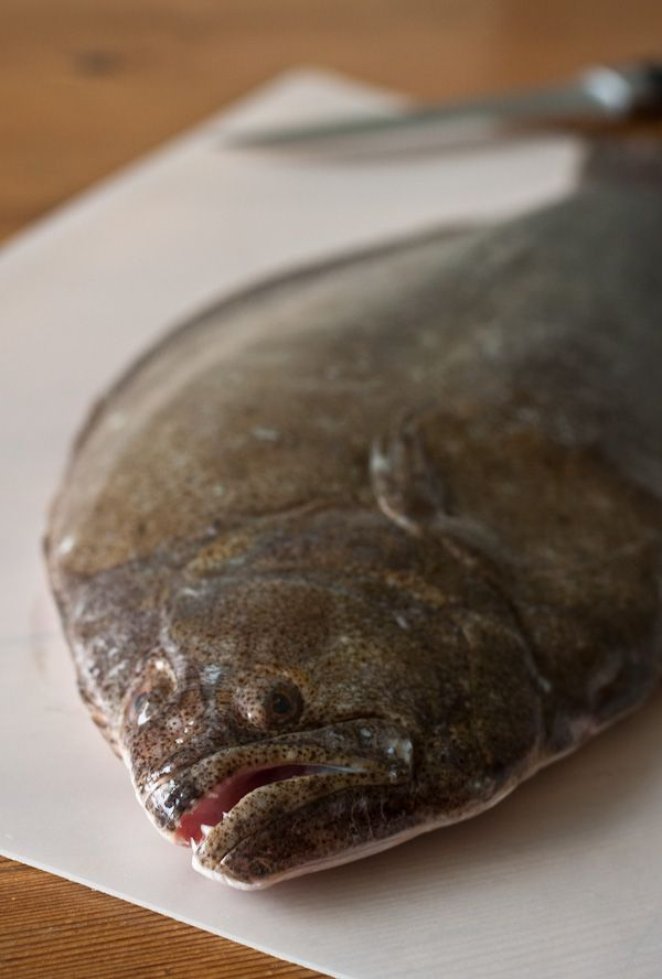 How To Fillet Flat Fish