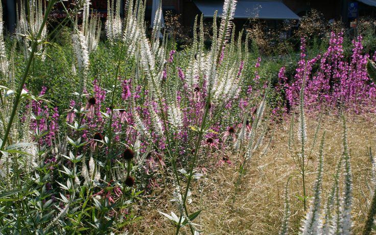 Sichtschutz pflanzen mit Stauden und Gräsern Stauden