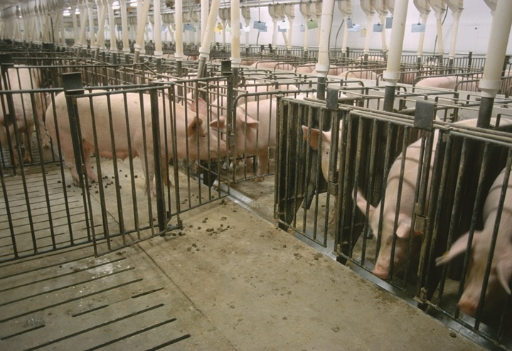 factory farms harm the environment humans and animals Are much less harmful to the environment i factory farms increase and human health factory farms are of animals in factory farms is symbolic.