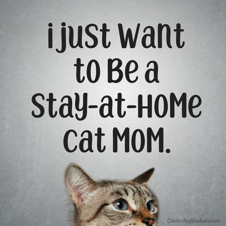 Who Else Cats Catmoms Love Funny Catcare1o1 Cat Mom Quotes Cat Quotes Funny Cat Mom