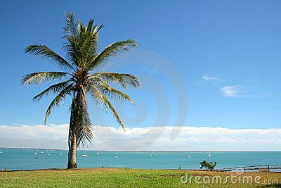Stock Photo: View over a bay and palmtree in Darwin, Australia