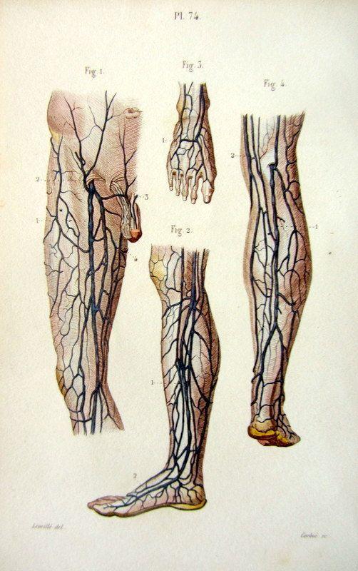 1852  Vintage Human foot and leg Anatomy color by LyraNebulaPrints