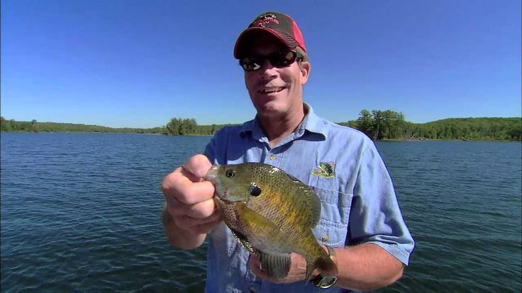 Drop-Shot Bluegills!
