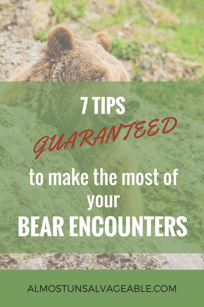 7 tips GUARANTEED to make the most of your bear encounters