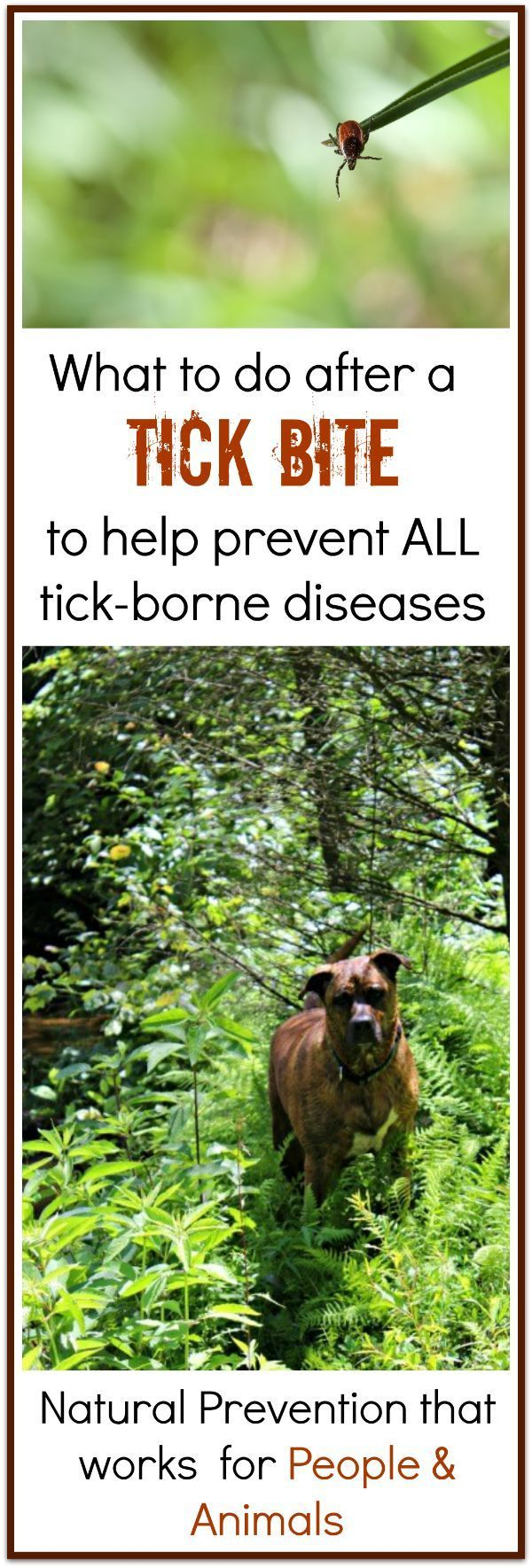 how to prevent lyme disease after a tick bite